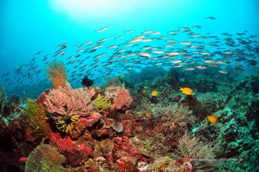 Korallenriffe und Fischschwärme - Tauchsafari Philippinen