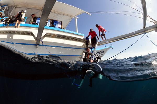 Auf Tauchsafari: Ein- uns Ausstiege vom Safariboot