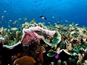 Korallenriff auf den Philippinen